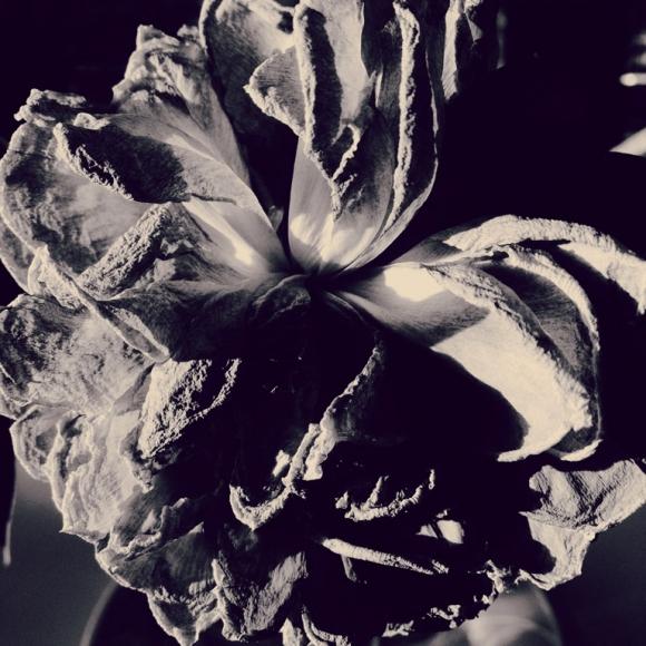 dorit-kerlekin-2ndplace-flowers