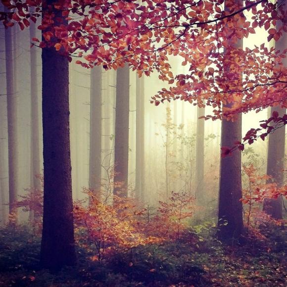 mariko-klug-3rdplace-trees
