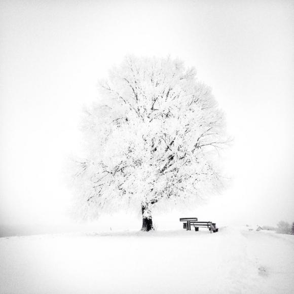 jana-bochet-2ndplace-trees