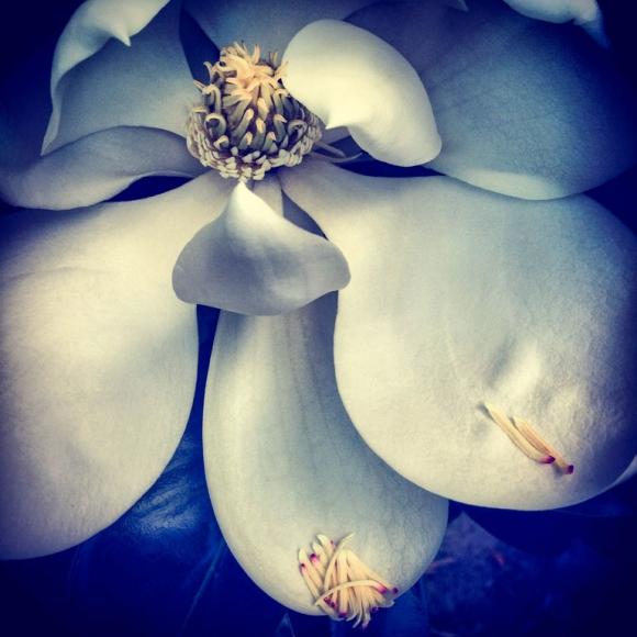 nicky-ryan-3rd-place-flowers