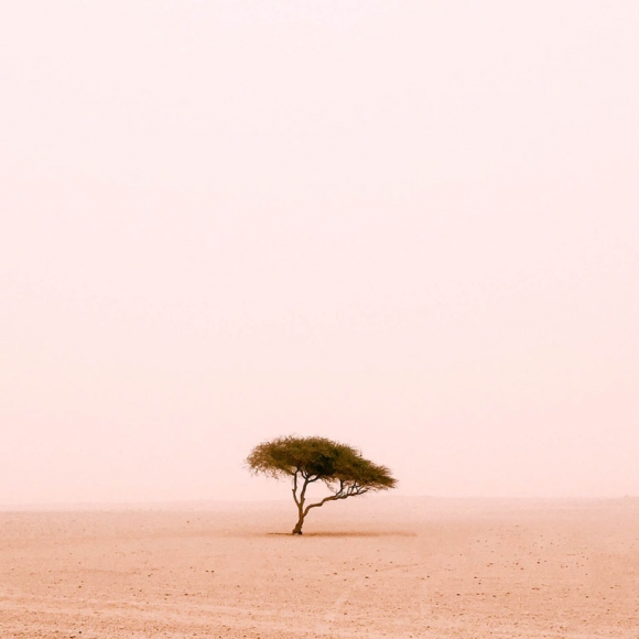 ruairidh-mcglynn-1stplace-trees