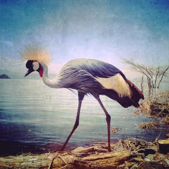 sephi-bergerson-1stplace-animals