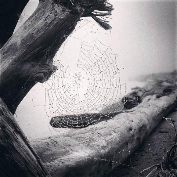 yvonne-naughton-1stplace-nature